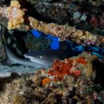 Best Scuba Diving Packages Fiji – Book a Package