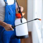 RISKS OF POSSUM INFESTATION IN MELBOURNE HOMES
