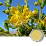 Affordable Chaparral Powder Supplier | Bulk Chaparral Powder Supplier